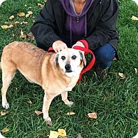 Adopt A Pet :: Sandy - Elyria, OH