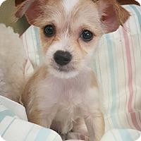 Adopt A Pet :: Scorch - Fredericksburg, TX