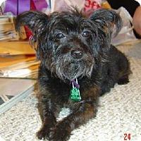 Adopt A Pet :: E Mrs. T - Lafayette, LA