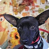Adopt A Pet :: Dude - San Antonio, TX