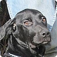 Adopt A Pet :: Wentworth - Germantown, MD