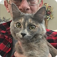 Adopt A Pet :: Gidget - Palm Springs, CA