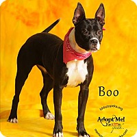 Adopt A Pet :: Boo - Topeka, KS