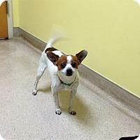 Adopt A Pet :: Baxter - North Wilkesboro, NC