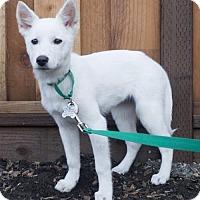 Adopt A Pet :: Rosemary - Palo Alto, CA