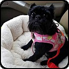 Adopt A Pet :: GYPSY ROSALEE in Bryant, AR
