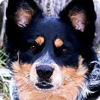Adopt A Pet :: JACOB(GORGEOUS-SO SMART! WOW! - Wakefield, RI