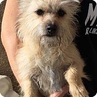 Adopt A Pet :: Reggie - Albuquerque, NM