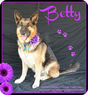 German Shepherd Dog Dog for adoption in Plano, Texas - Betty