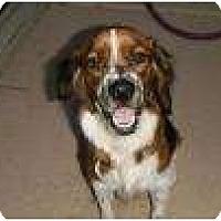 Adopt A Pet :: Sprinkles - Phoenix, AZ