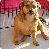 Adopt A Pet :: CHUNKY - Fowler, CA