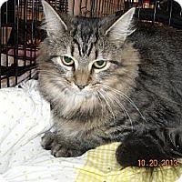 Adopt A Pet :: Josie - Riverside, RI