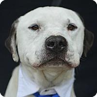 Adopt A Pet :: Frisco - Plano, TX