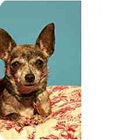 Adopt A Pet :: MOLLY - Pembroke Pines, FL