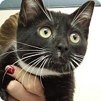Adopt A Pet :: Erica Gimpel - Richboro, PA