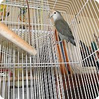 Adopt A Pet :: Reggie - Neenah, WI