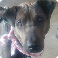 Adopt A Pet :: Charlie - Hadley, MI