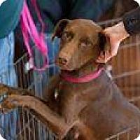 Adopt A Pet :: Abigail - Marlton, NJ