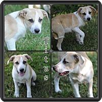 Adopt A Pet :: Titus meet me 8/21 - East Hartford, CT