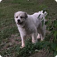 Adopt A Pet :: Mac - Bloomington, IL