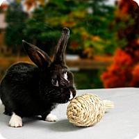 Adopt A Pet :: Orpheus - Marietta, GA