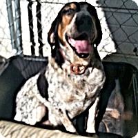 Adopt A Pet :: Sparkie - Williston Park, NY