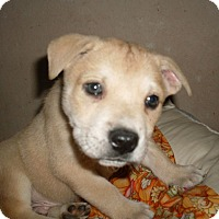Adopt A Pet :: Cola - Austin, TX