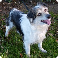 Adopt A Pet :: Stanely - Los Angeles, CA