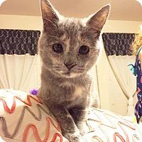 Adopt A Pet :: Monkey - Arlington/Ft Worth, TX