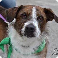 Adopt A Pet :: Chester - Conroe, TX