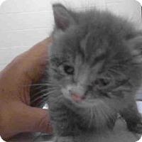 Adopt A Pet :: A270303 - Conroe, TX