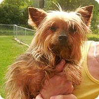 Adopt A Pet :: Chief - Brunswick, ME
