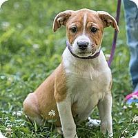 Adopt A Pet :: Brittney - Plainfield, CT