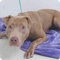 Adopt A Pet :: NALA - Oroville, CA
