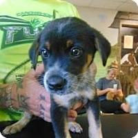 Adopt A Pet :: Smokey - Bernardston, MA