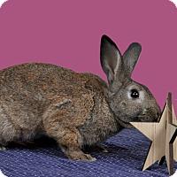 Adopt A Pet :: Moe - Marietta, GA