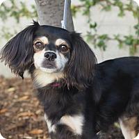 Adopt A Pet :: Camilla - Corona, CA