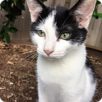 Adopt A Pet :: Carl - Dublin, CA
