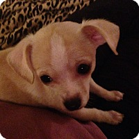 Adopt A Pet :: Johnny - Winchester, CA
