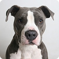 Adopt A Pet :: Panama - Redding, CA
