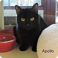 Adopt A Pet :: Apollo - Slidell, LA
