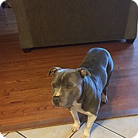 Adopt A Pet :: Baloo - Courtesy Posting - Pleasanton, CA