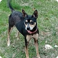 Adopt A Pet :: Bella - Macon, GA