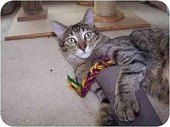 Domestic Shorthair Cat for adoption in Sheboygan, Wisconsin - Larry