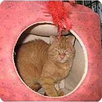 Adopt A Pet :: Friskie - Trexlertown, PA