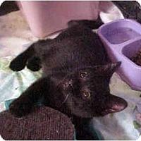 Adopt A Pet :: Tiny Tina - Jenkintown, PA