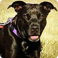 Adopt A Pet :: Mona - Cheyenne, WY