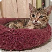 Adopt A Pet :: Ariel - Acme, PA