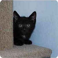 Adopt A Pet :: Quentin - Modesto, CA