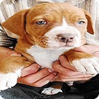 Adopt A Pet :: Chandler - San Diego, CA